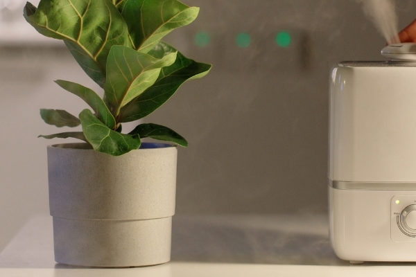 The Best Humidifier in NZ and How To Pick One That Makes Your House Comfortable